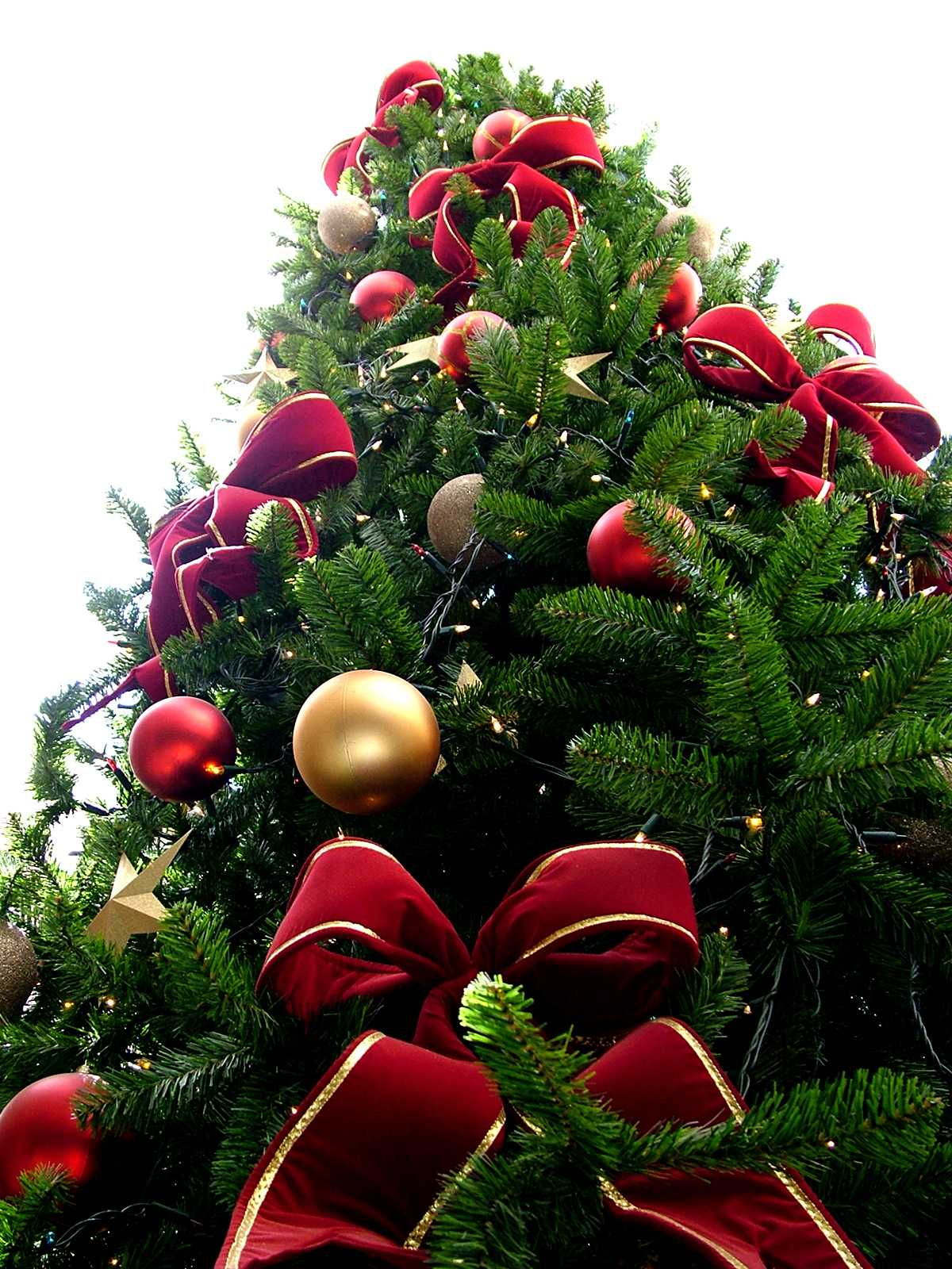 History Behind Christmas Traditions | The Word