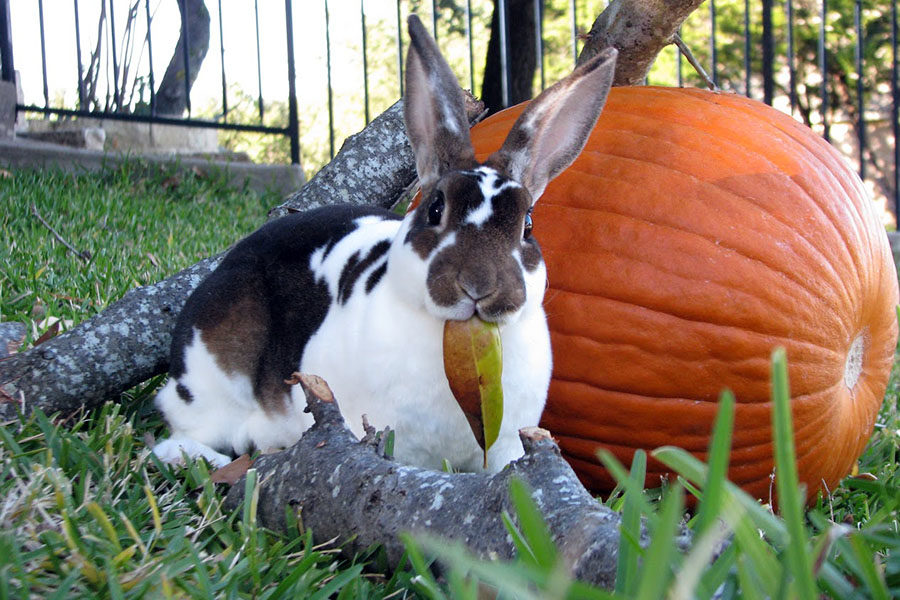 Hop into fall