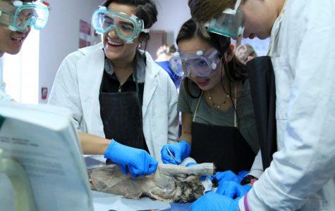 Anatomy Students Examine Cat Muscles