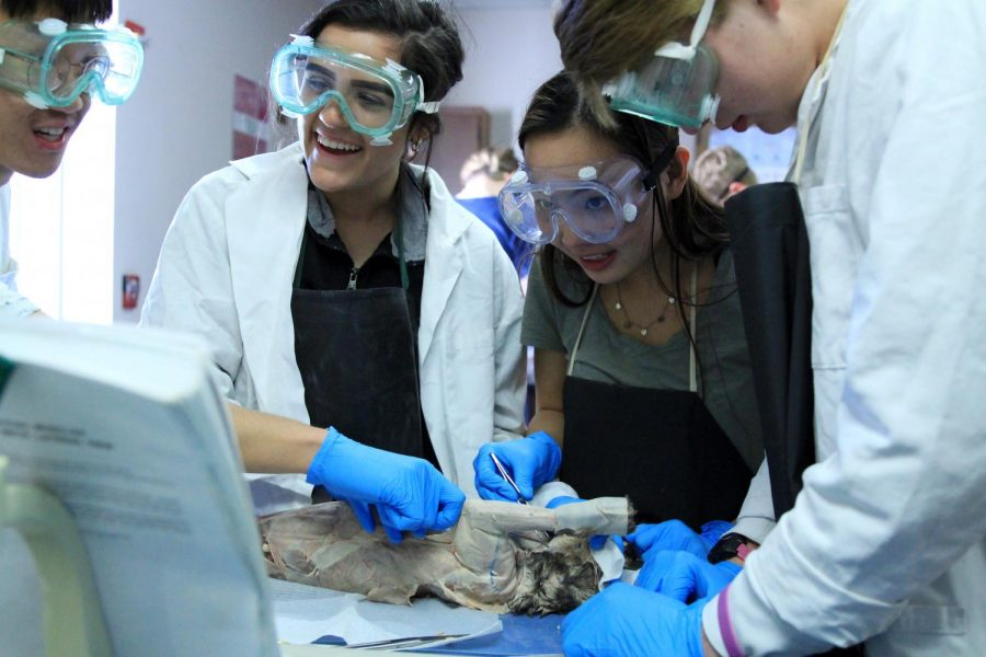 Anatomy Students Examine Cat Muscles